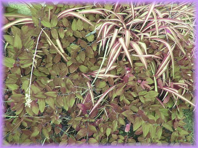 Fouillis végétal