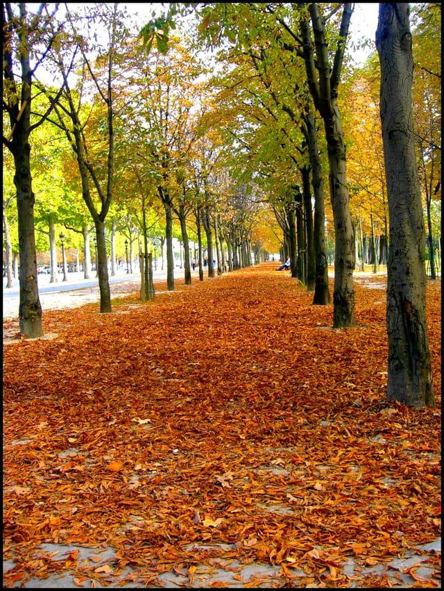 Fouler les feuilles mordorées...
