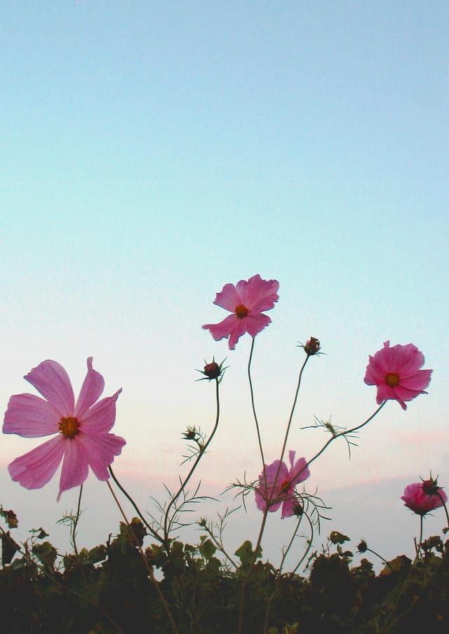Friche fleurie