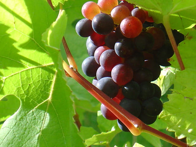 Fruit de l'automne