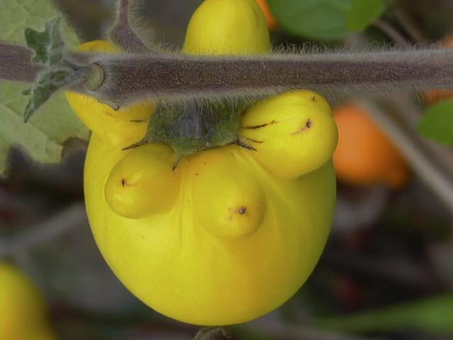 Fruits contre les mauvais esprits