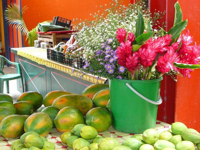 Fruits & fleurs exotiques