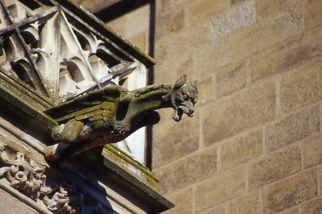 Gargouille cathédrale st etienne