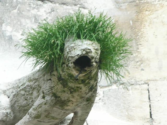 Gargouille cheveulue