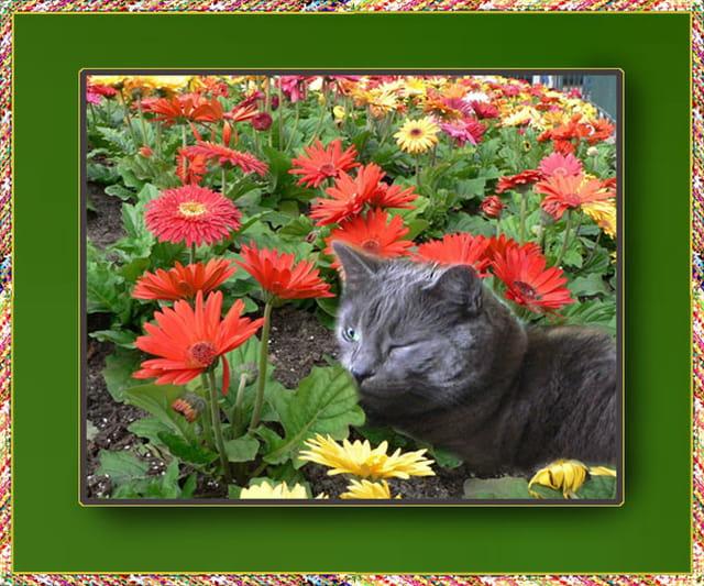 Gaston parmi les fleurs