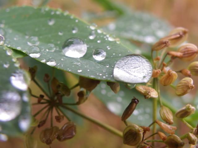 Goutte après la pluie