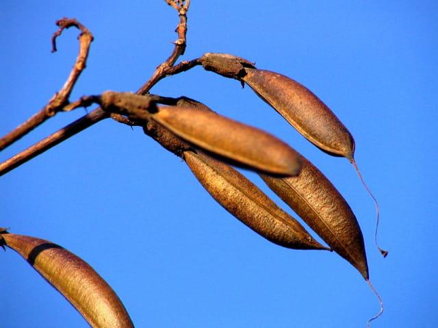 Graines d'automne