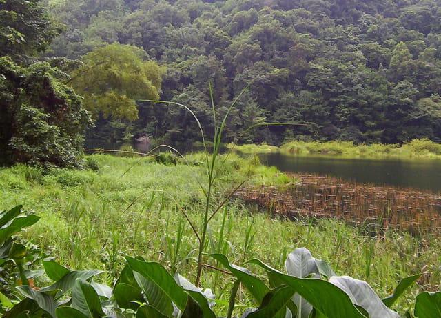 Grand étang