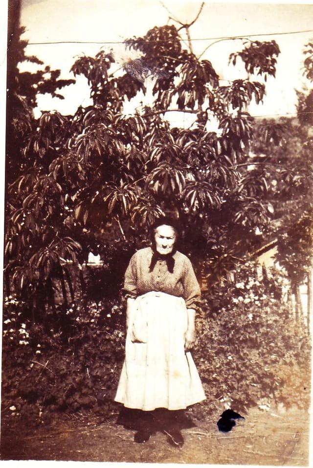 grand mère sous un cerisier