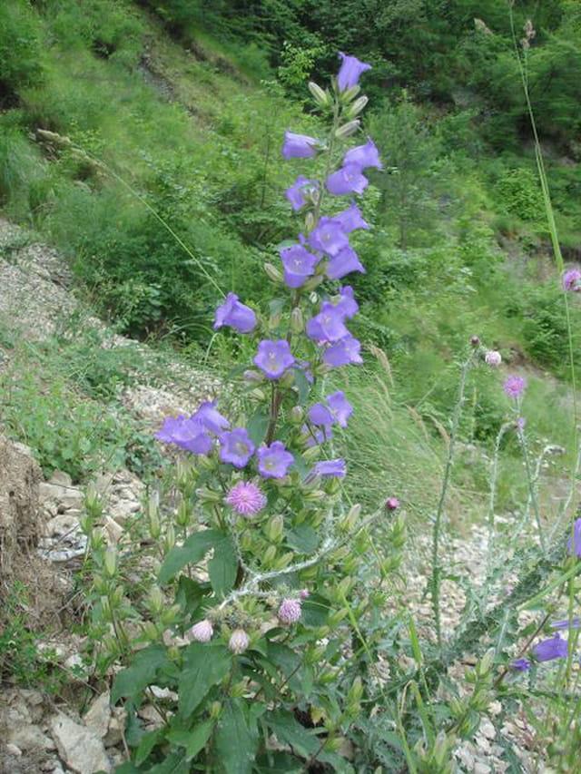 Grandeur des fleurs