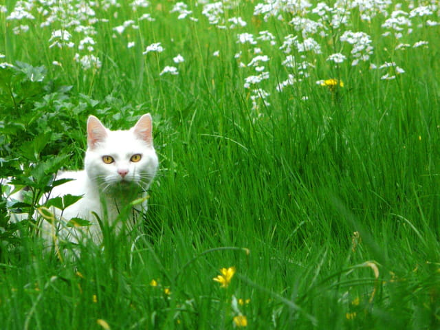 Green grass cat