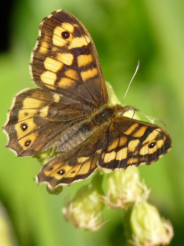 Gros plan sur un papillon