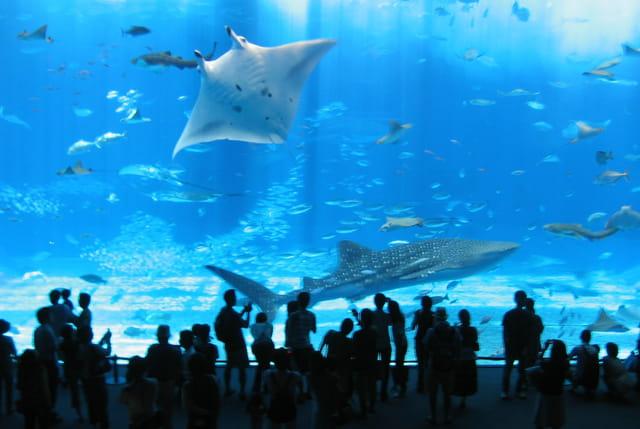 Gros poissons par sylvain petit sur l 39 internaute for Gros poisson aquarium