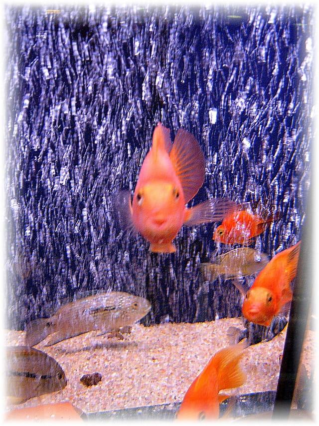 Gros poisson par martine guilbert pellet sur l 39 internaute for Gros poisson aquarium