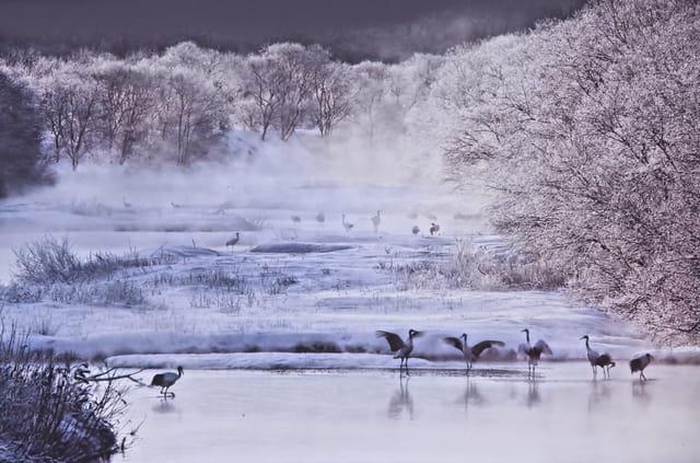 Grues lac du Der...