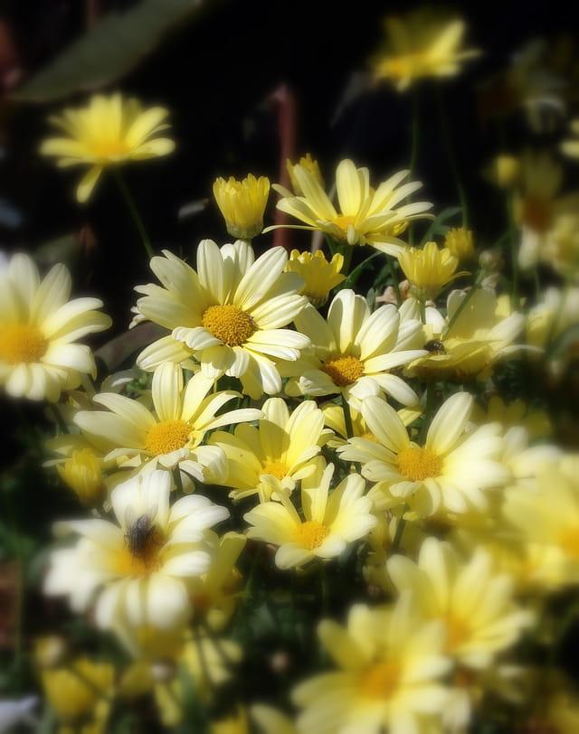 Ha! les fleurs...