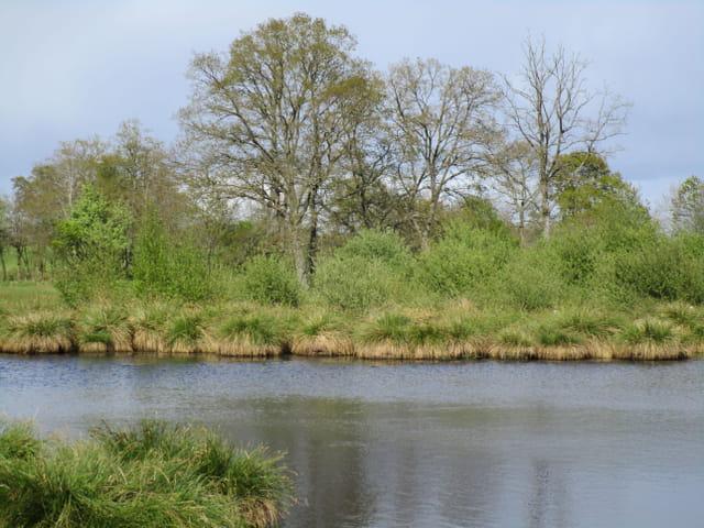 Habitat des grenouilles rousses par christine letessier for Forum habitat plus