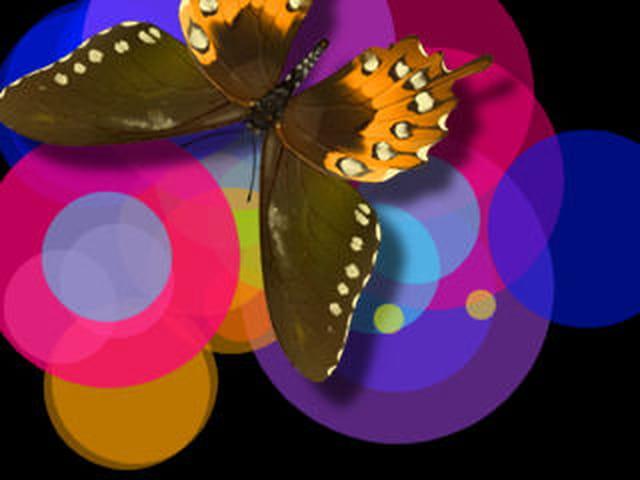 Hallucination du papillon de fred
