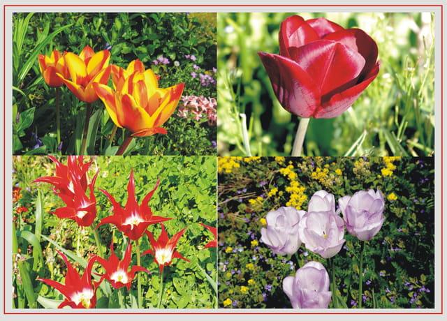 harmonie de printemps