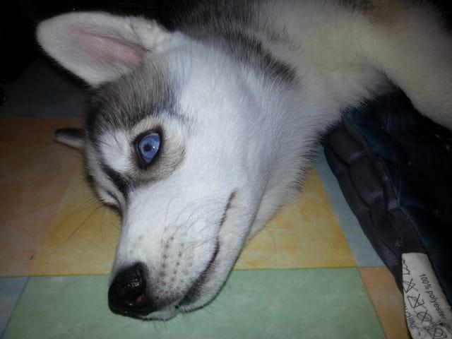 Hatchi, 4 mois