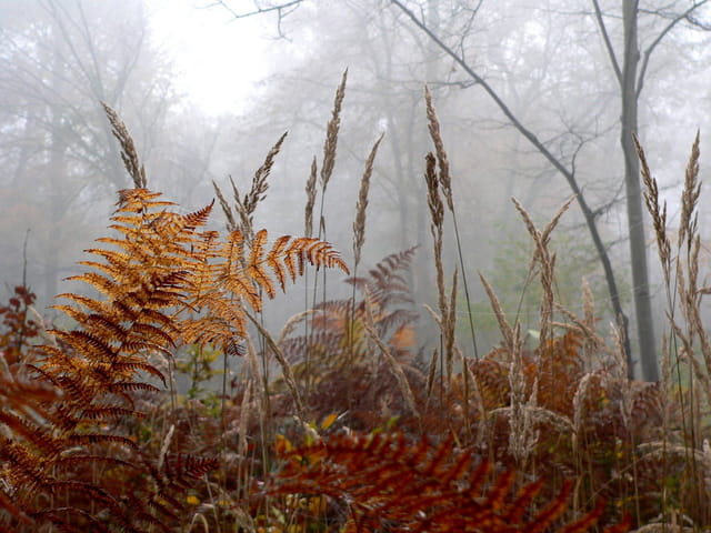 Herbes et brouillard