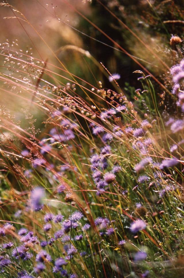 Herbes et fleurs des champs
