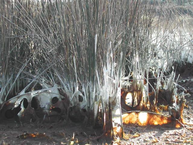 Herbes sauvages en coque de sel