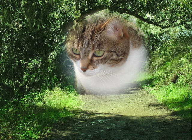 hermione le chat geant
