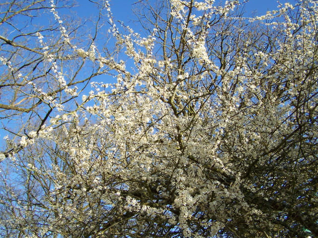 hier,le ciel bleu du printemps