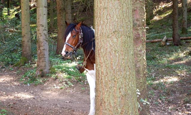 Hihihi derrière mon arbre ils ne me trouveront pas !!!