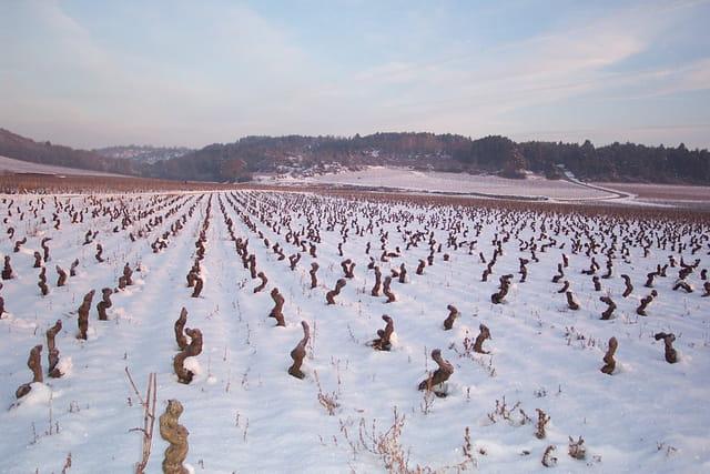 Hiver 2006 neige sur les vignes