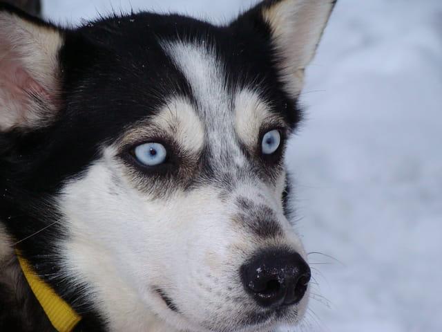 Hiver en Laponie Finlandaise