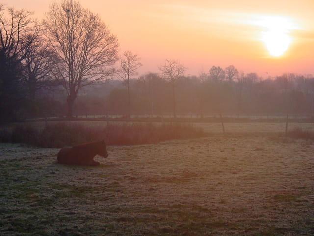 Hivernal matin calme