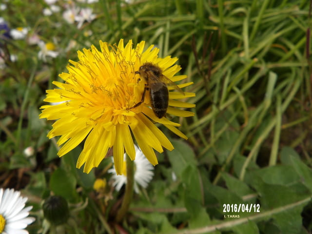 Il faut travailler pour faire du bon miel