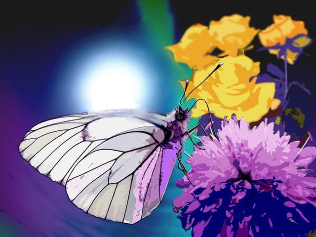Il veut devenir papillon de nuit