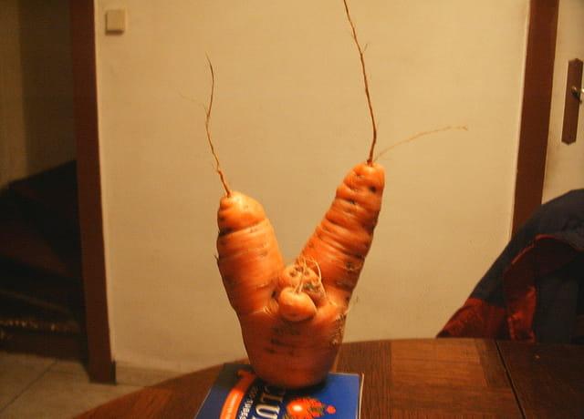 Incroyable carotte