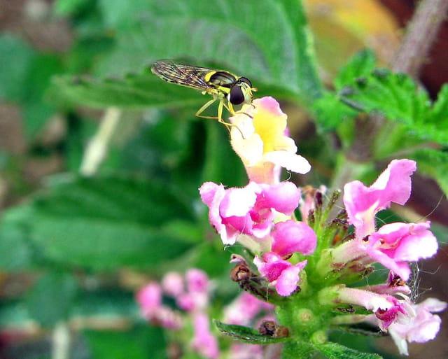 Insecte 5030