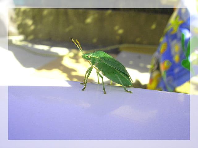 insecte volant non identifié