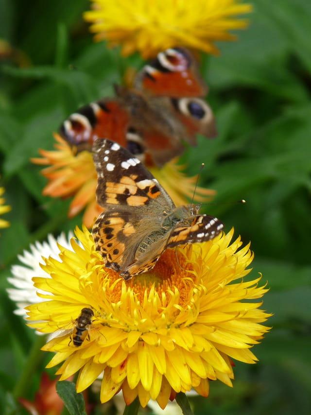 Insectes butineurs par Malou TROEL sur L'Internaute