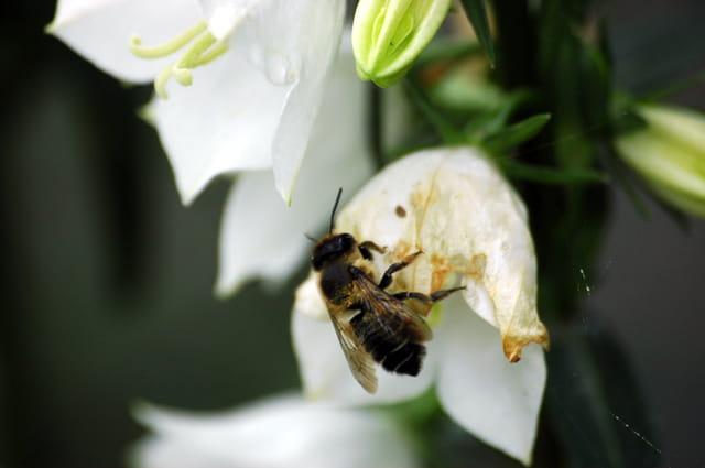 Insectes et fleurs
