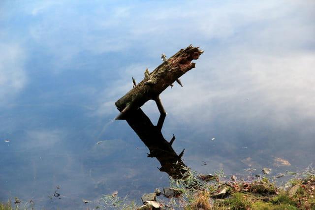 Insolite - Lac de Lispach