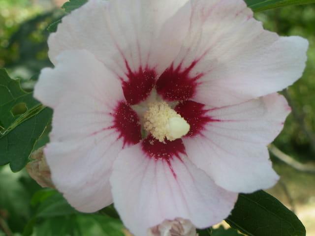Intérieur d'une fleur