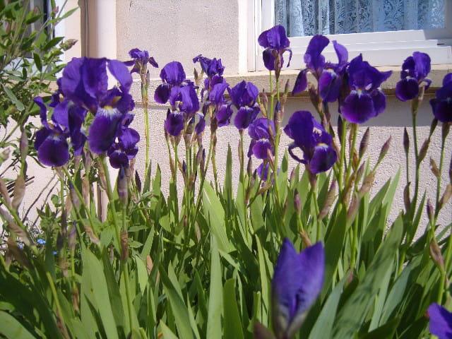 Iris for ever