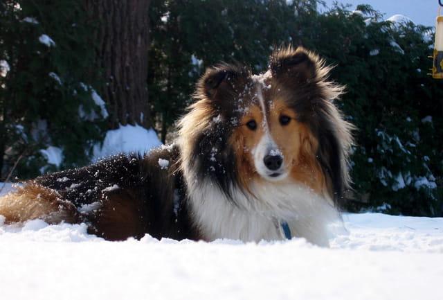 J'aime l'hiver...porto