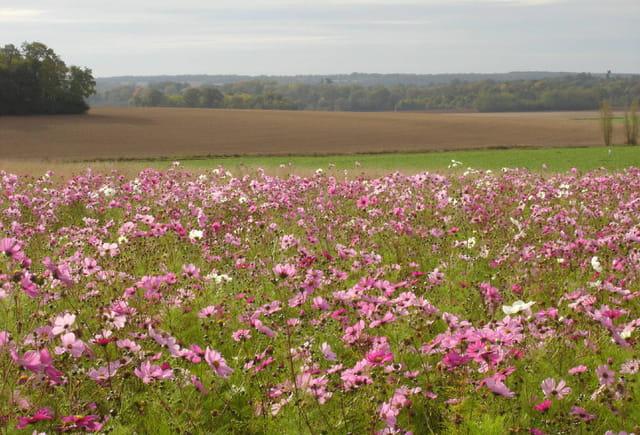 Jachère fleurie dans le paysage