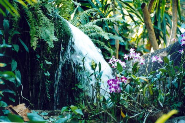 jardin aux papillon