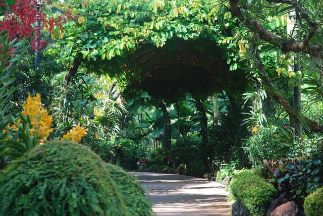 Jardin botanique de singapour par genevieve lapoux sur l for Jardin botanique singapour