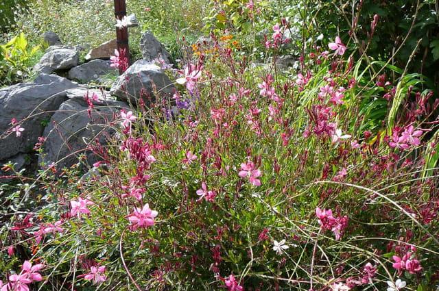 Jardin botanique du ch teau fort 4 par jacqueline dubois for Bd du jardin botanique
