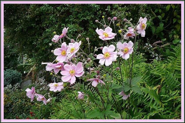 Jardin botanique du ch teau fort 9 par jacqueline dubois for Bd du jardin botanique