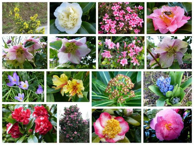 Jardin breton en janvier